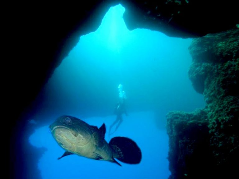 diving, gozo, bed, breakfast, guest, house